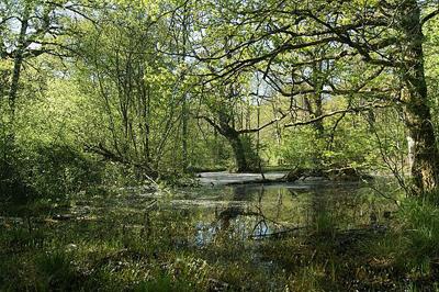 El bosque de orgi